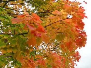 autumn-70882_640