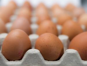 eggs-550652_640