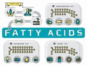 fatty-ascids14252082