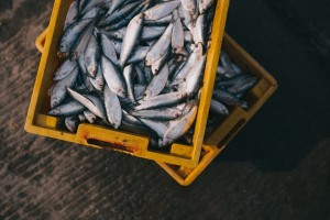 fish-984299_640