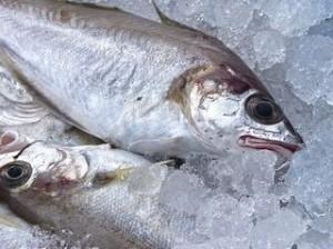 fresh-fish-1152113_640