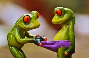 frogs-1159441_640