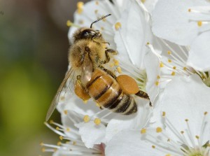 insects-695144_640