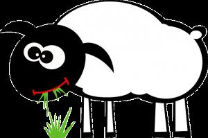 sheep-161389_640