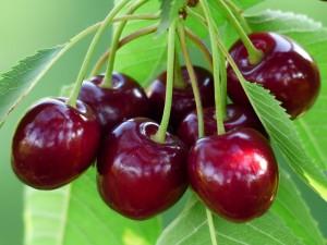 cherry-167341_640