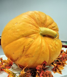 large-pumpkin-959123_640