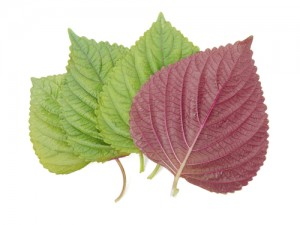 shiso-leaves1