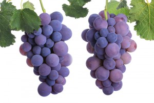 grape-seed-beauty3858