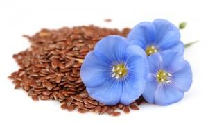flax-taste3067639