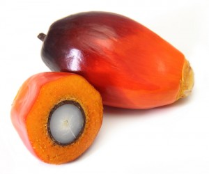 palm-oil258876