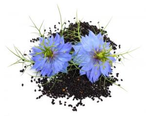 black-cumin-seed06052010