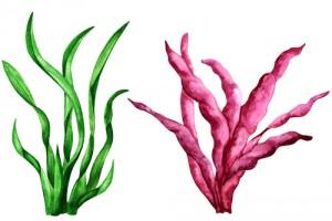 seaweeds20084948