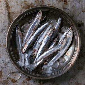 fish-oil534693484