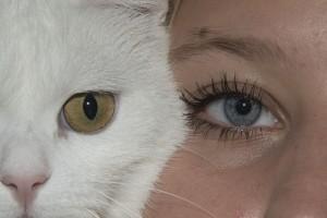eye-943122_640