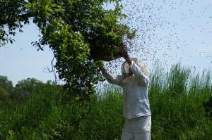 hive-1094857_640