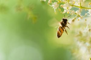 honey-christal07771 (2)
