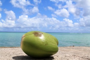 coconut-1179414_640