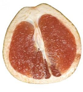 grapefruit-395345_640