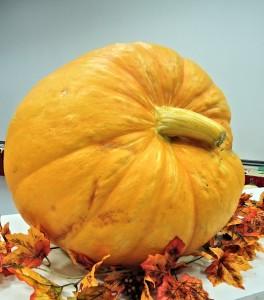 large-pumpkin-959123_640