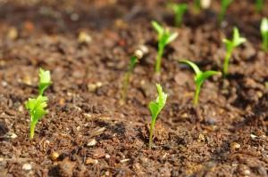 plants-1206382_640