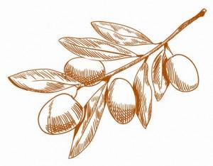 olive-oil-face-wash39007