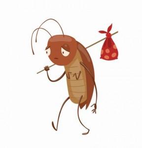 clove-cockroarch1476