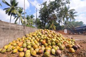 coconuts-oil-mold3802467