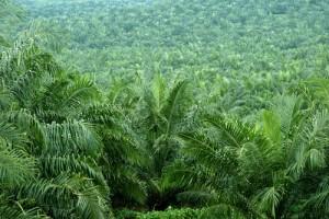 palm-oil0188975