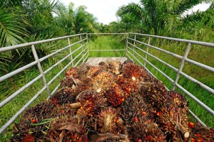 palm-oil420924
