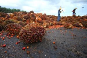 palm-oil7964879