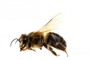 bee-workers549387