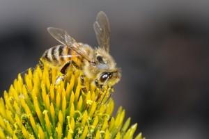 buckfast-bee59371726
