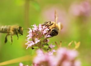 italian-bee9827010