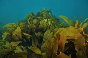 seaweeds8304777