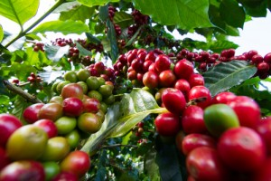 shingle-origin-coffee50639190